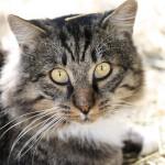 marco-maso-gatto