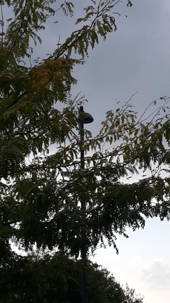 Castagnole-Paese-Telecamera-Coperta-Alberi-20150825_182655